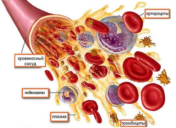 Анализ крови сухареву