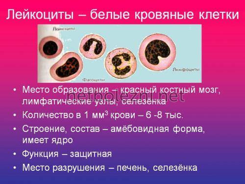 Пониженные нейтрофилы и повышенные лимфоциты в крови у ребенка