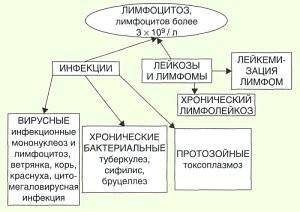 Лимфоциты крови норма