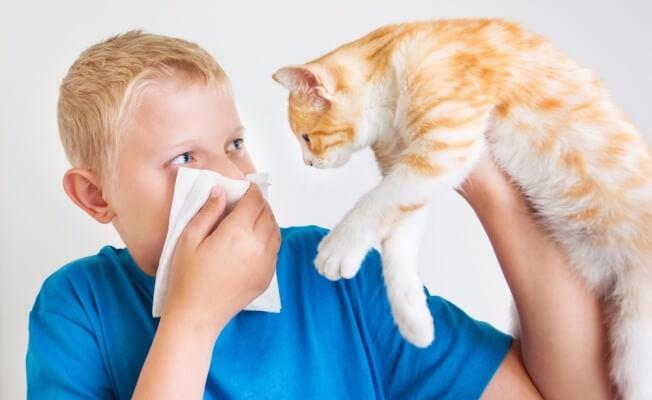 Аллергия на шерсть кошек симптомы у детей лечение