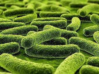 Фото 3.Возбудитель туберкулеза - микобактерии или палочки Коха под микроскопом