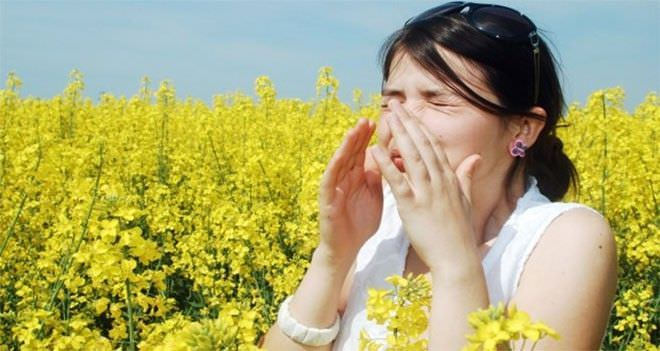 Один из наиболее распространенных видов аллергенов - пыльца цветущих растений.