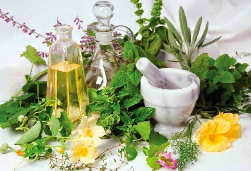 Лекарственные растения без проблем можно приобрести в любой аптеке