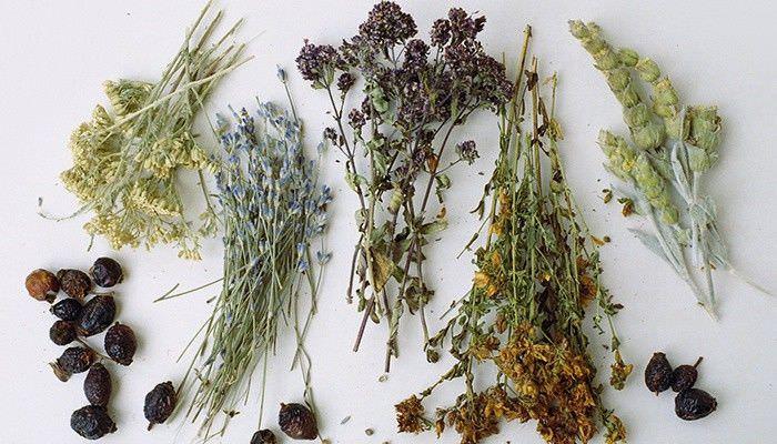 Отхаркивающие травы при сухом кашле лучше использовать комплексно