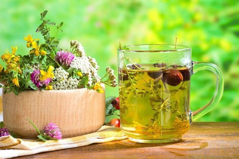 Лекарственные травы в лечении кашля
