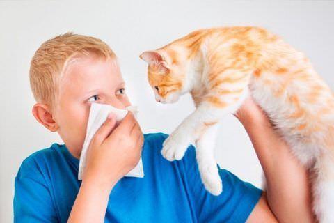 Шерсть домашних животных может спровоцировать кашель