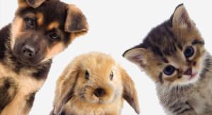 Тест: Что вы знаете о животных?