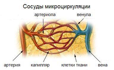 Упражнения для улучшения кровообращения головного мозга: гимнастика для головы, шеи, плеч, дыхательная